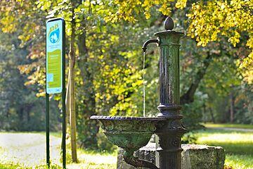 Wasser_Wald_Trinkwasserbrunnen.jpg