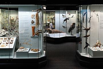 2019_02_25_Naturkundemuseum_13.jpg